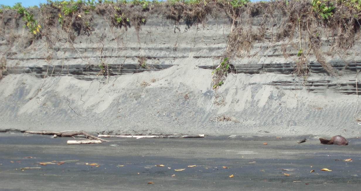 Fig 4: Layered magnetite-bearing sand deposits on Koroua Island (yet to be drilled)